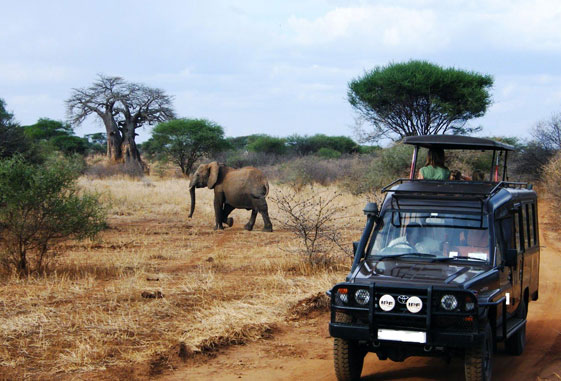wildlife-safaris